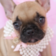 French Bulldog ID #278