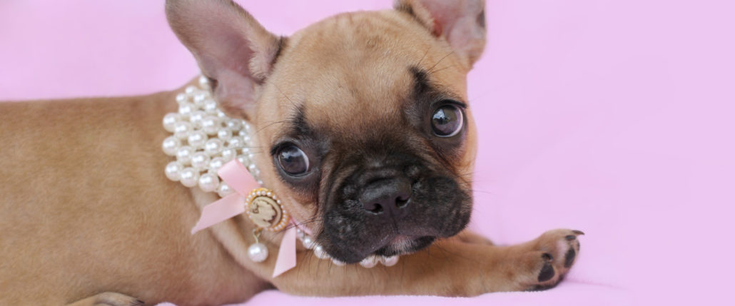 Puppies for sale by TeaCups, Puppies & Boutique of South Florida