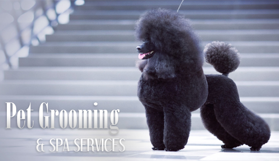 Pet Grooming & Spa Services at Teacups, Puppies & Boutique!