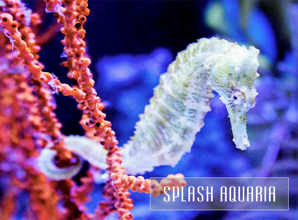TeaCups, Puppies and Boutique's Splash Aquaria boutique of saltwater fish and coral