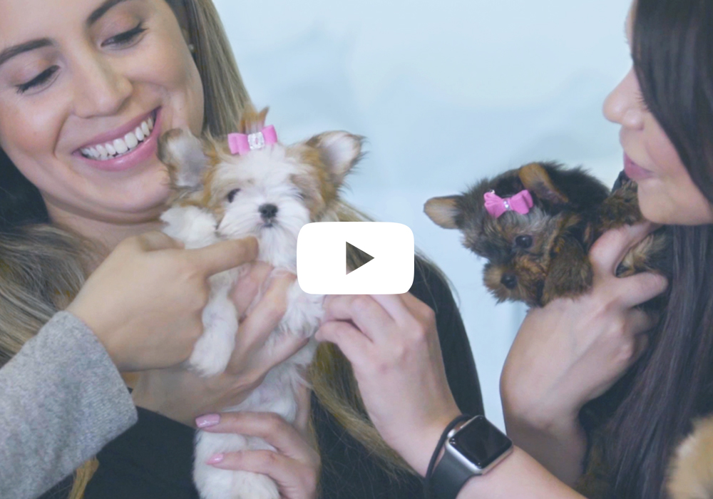 TeaCups, Puppies and Boutique Commercial