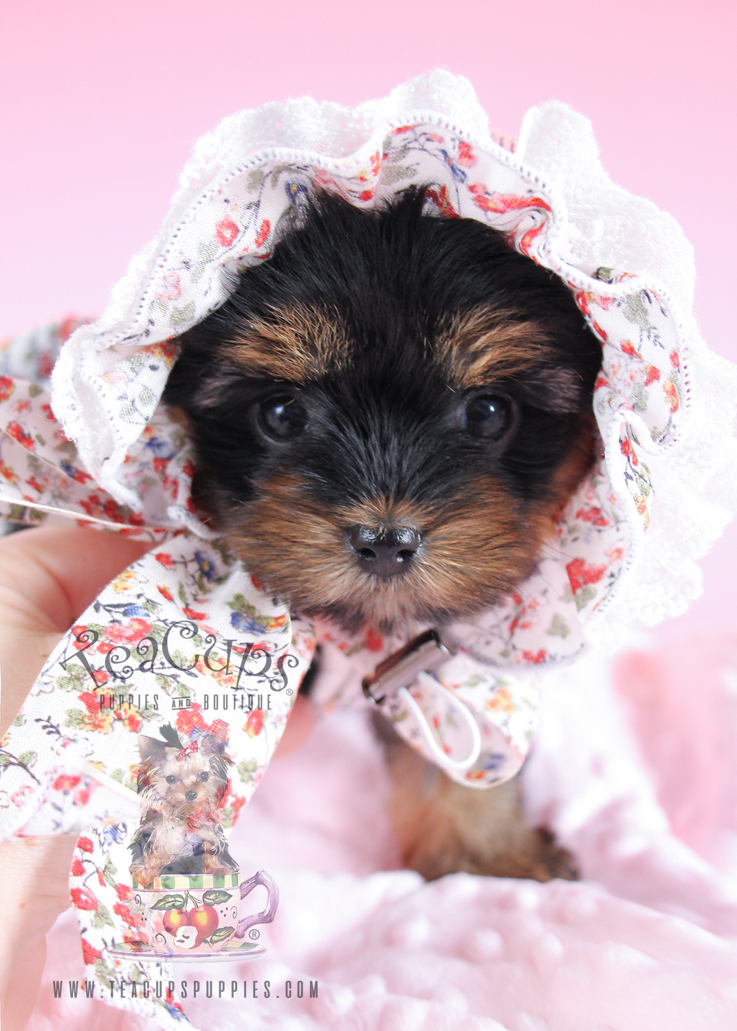 Yorkie puppy wearing a floral bonnet