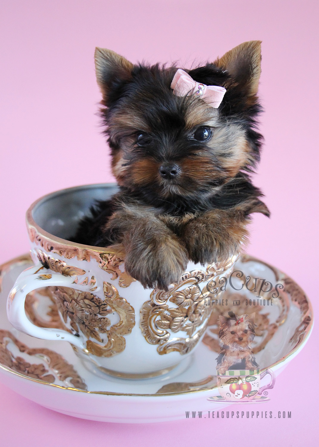Adorable Teacup Yorkie Puppy For Sale