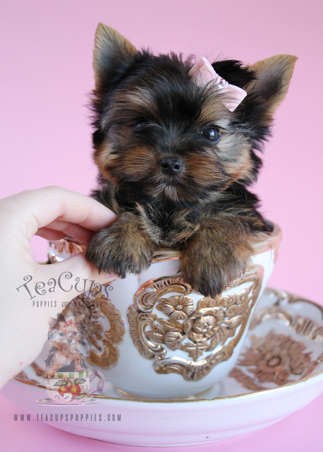 Dog Beds For Teacup Yorkies