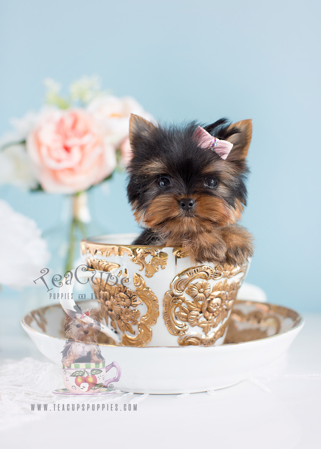 South Florida Micro Teacup Puppy