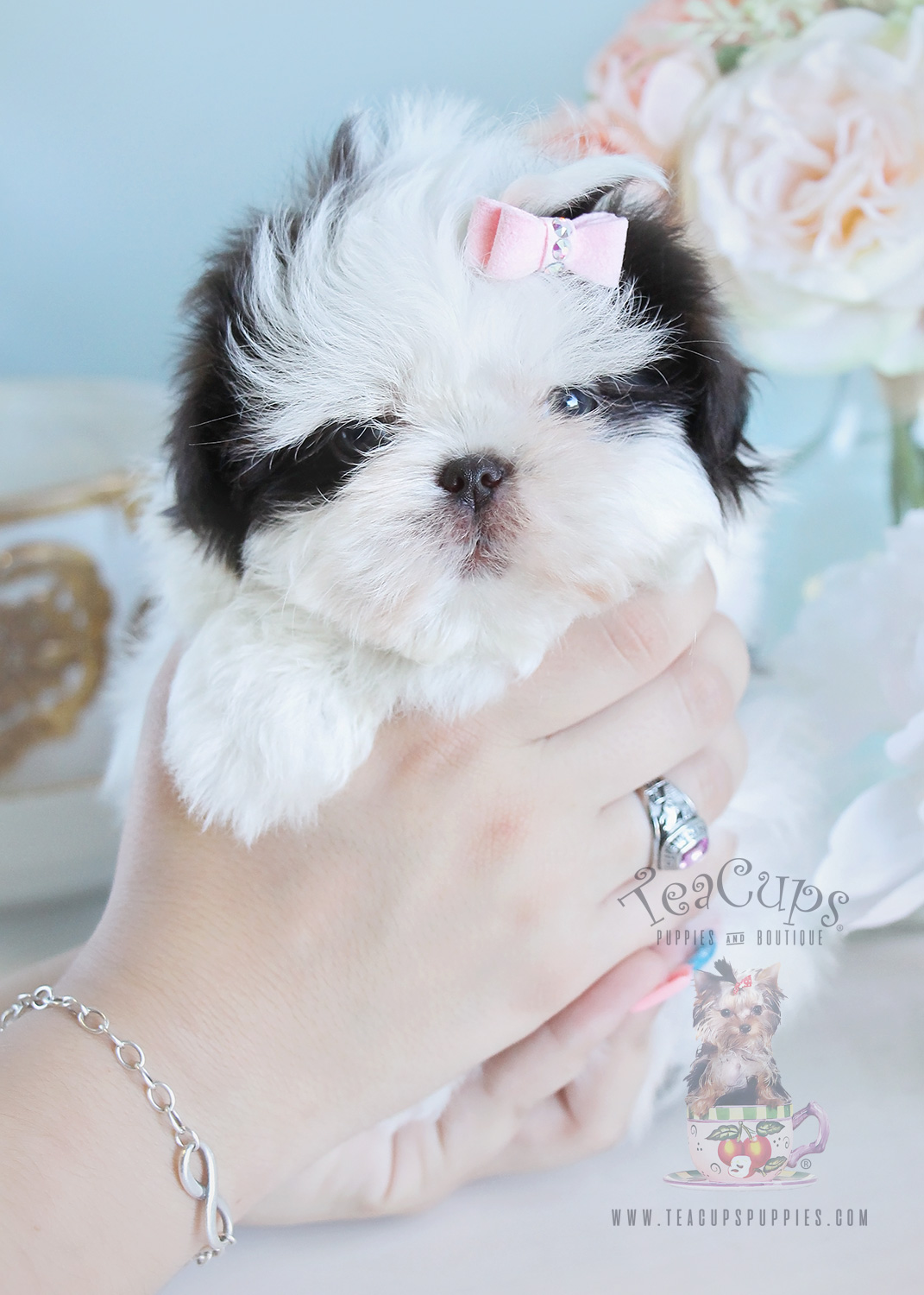 205 Shih Tzu Puppy For Sale Teacups Puppies