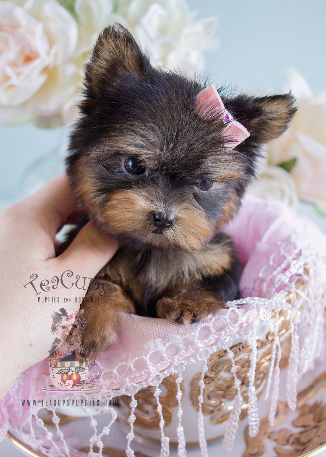 Teacup Yorkie Puppy For Sale #185