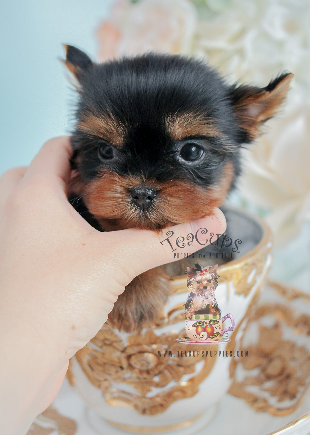 Tiny Yorkie Puppy For Sale #275