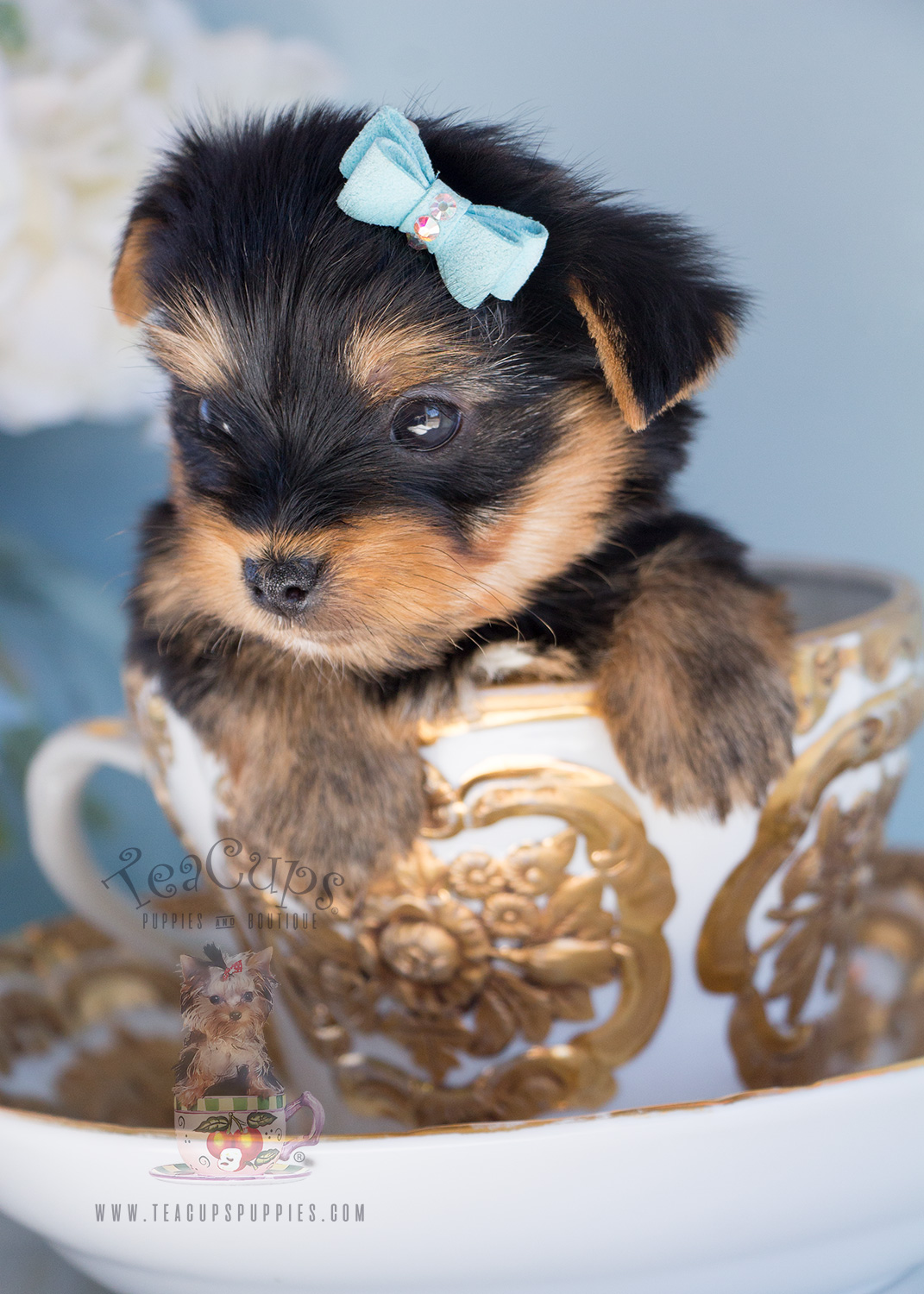 Yorkie Puppy For Sale #283