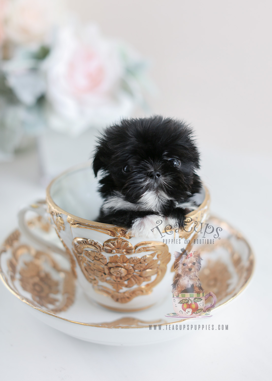 Tiny Imperial Shih Tzu Puppy For Sale #015