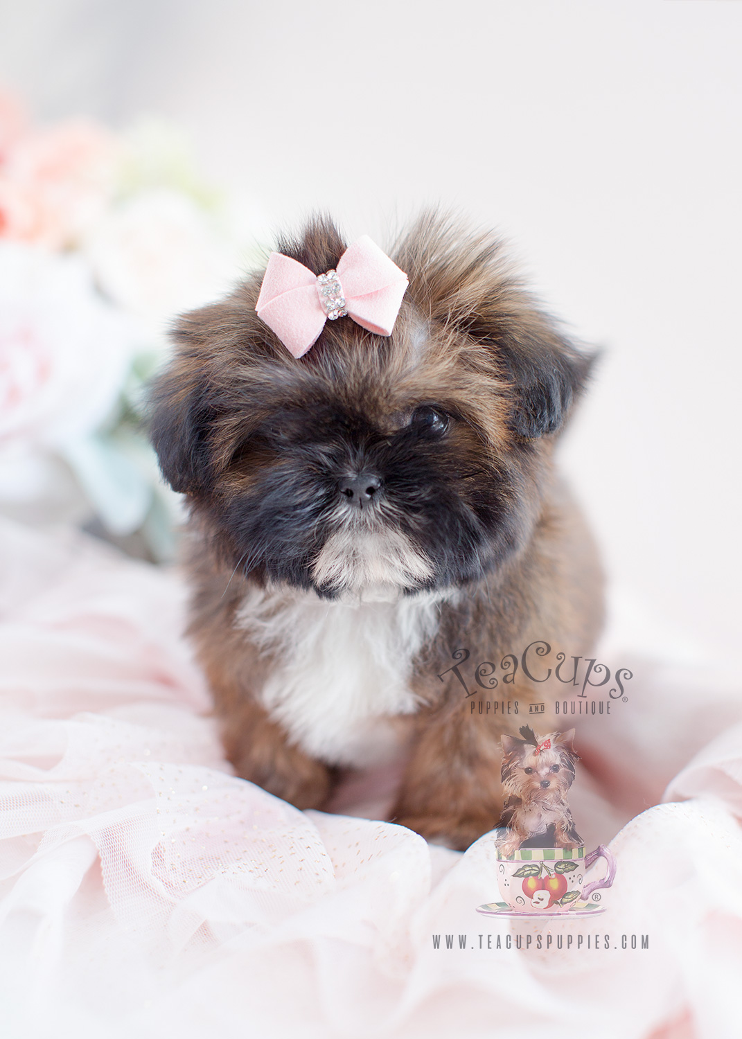 Shih Tzu Puppy For Sale #028
