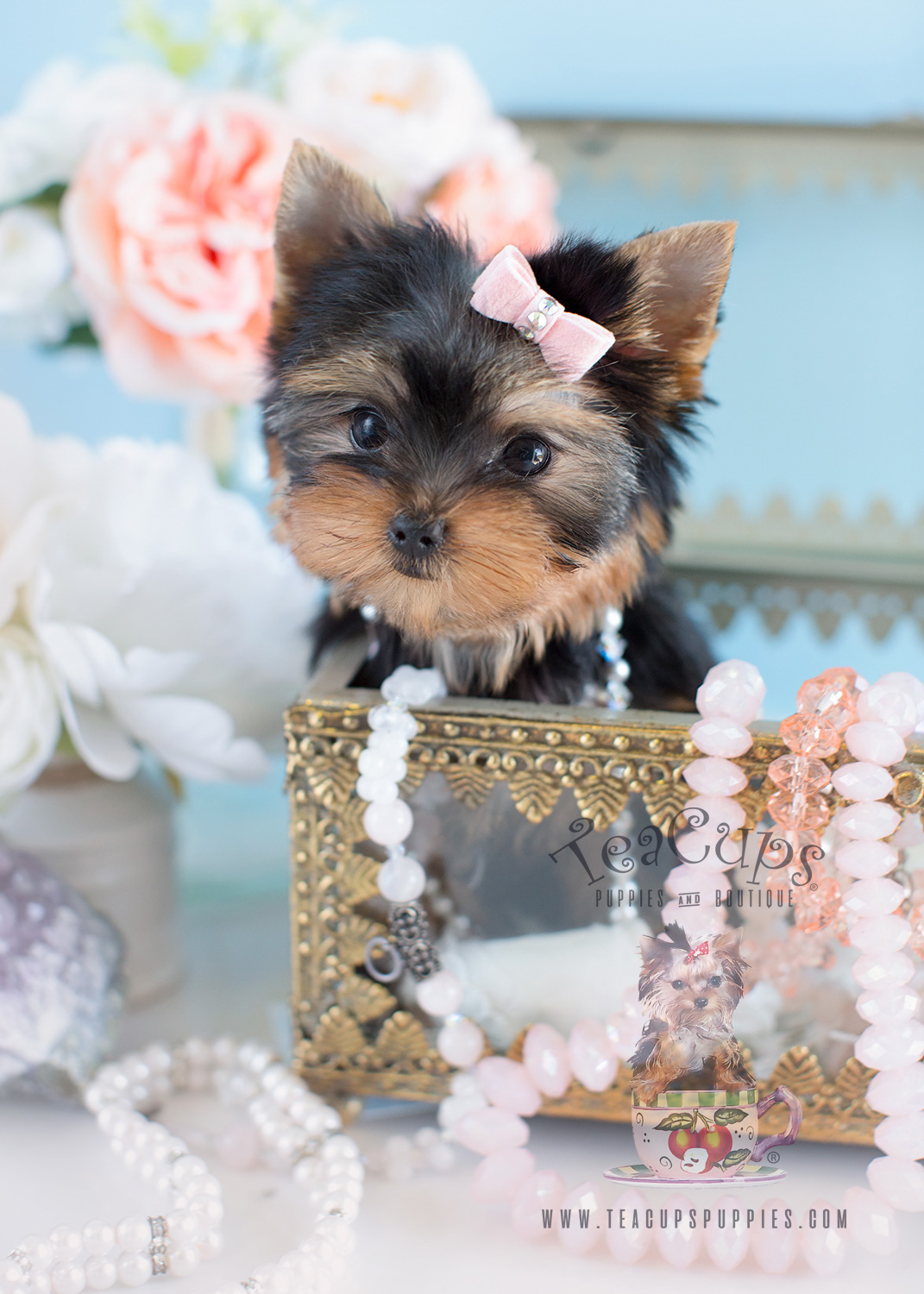 """Charming Teacup Yorkshire """"Yorkie"""" Terrier Puppies for"""