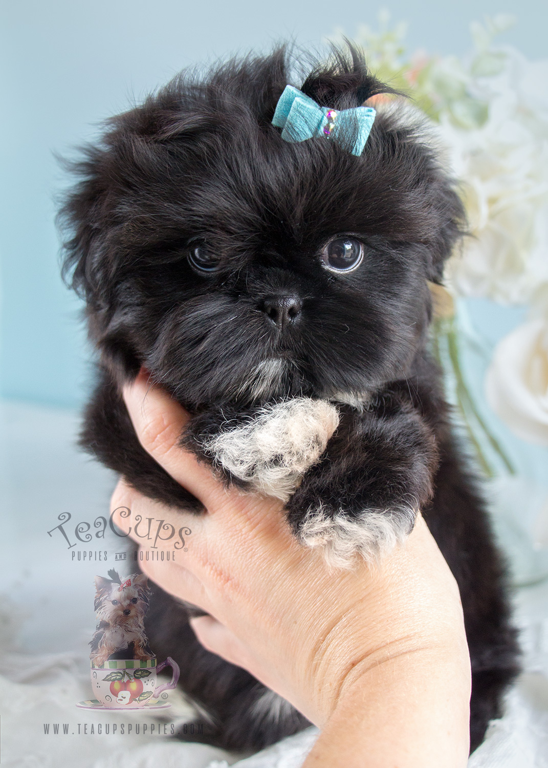 teacup shih tzu puppies for sale in ga teacup yorkie puppies teacups puppies boutique 5717